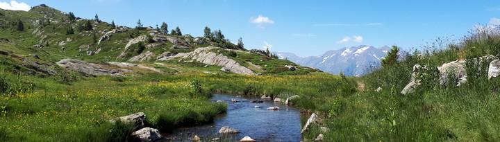 Lac montagne fleurs