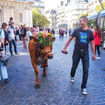 Descente des Alpages Grenoble © Loïs Perrin OTGAM (3).jpg