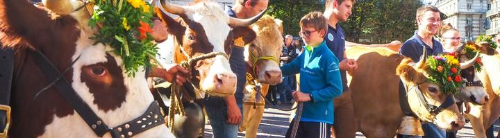 Descente des Alpages Grenoble © Loïs Perrin OTGAM (2).jpg