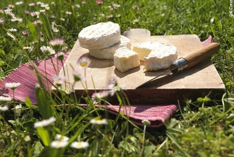 Fromage le Saint-Marcellin  ©k.creuset recadré.jpg